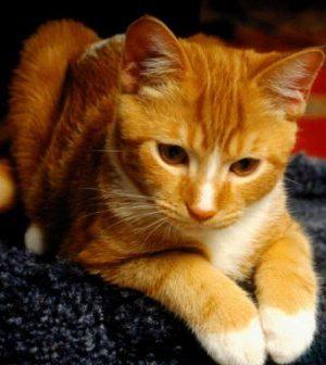 Listvichka_cat