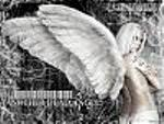 ANGEL81