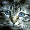 small_cat