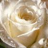 Роза-Зоя