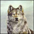 Волчица
