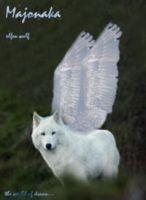 Majonaka-elfwolf
