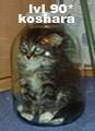 koshara