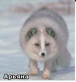 Арьяна