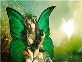 Sun Butterfly