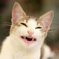 Злая Кошка Катя