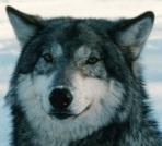 Фракийский волк