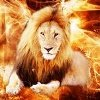 fire.lion