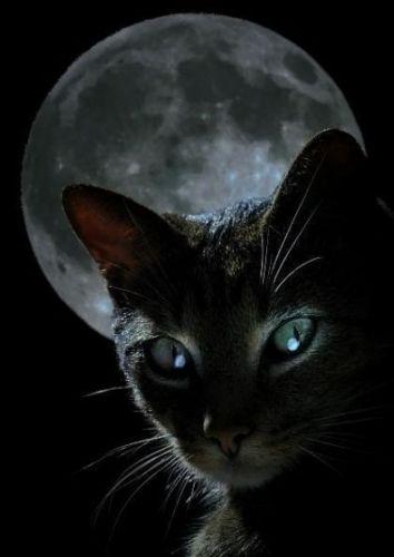 Тень Луны