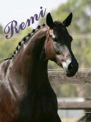 Remi Wedgewood