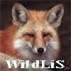 wildlis