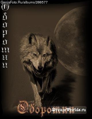 волчица-одиночка
