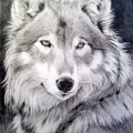 ксюша одинокая волчица