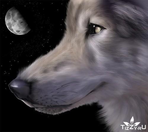 дина дикая луна