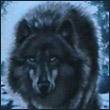 Shadow_of_Wolf