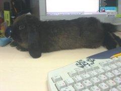Почему кролик опрокидывает миску