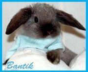 bantichek