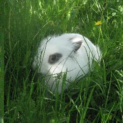 Труня заяц