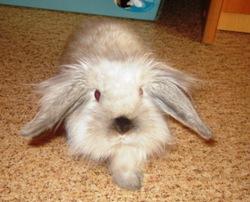 крольчиха Боня