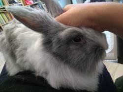 Кролик Юки