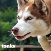 Тонкс