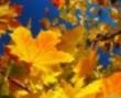 Осенняя_тишина