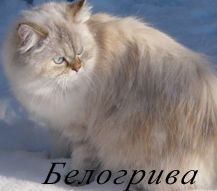 Белогрива
