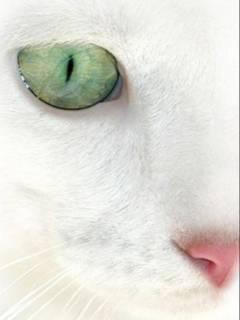 Белица