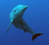 Дельфина