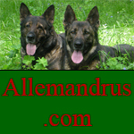 Allemandrus