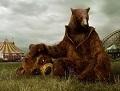 Медведь Боб
