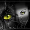 †Чёрная кошка†