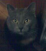кот котович