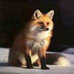 Sly_Fox