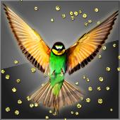 Paradise_Bird