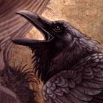 Der Schwarz Rabe
