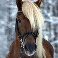 horsik
