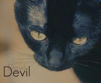 Дьявол Месть