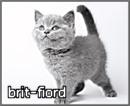 brit-fiord