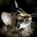 solveigcat