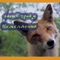 Fox-Alchemist