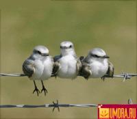 Перелетная_птица
