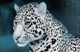 Белый Ягуар