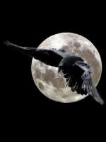 NightCrow