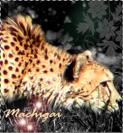 Machigai