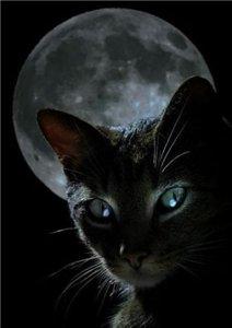 Ночная Тень