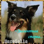 .Marsiella