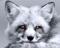 G.Fox