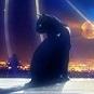 Blackkat