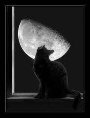 Лунная Тень